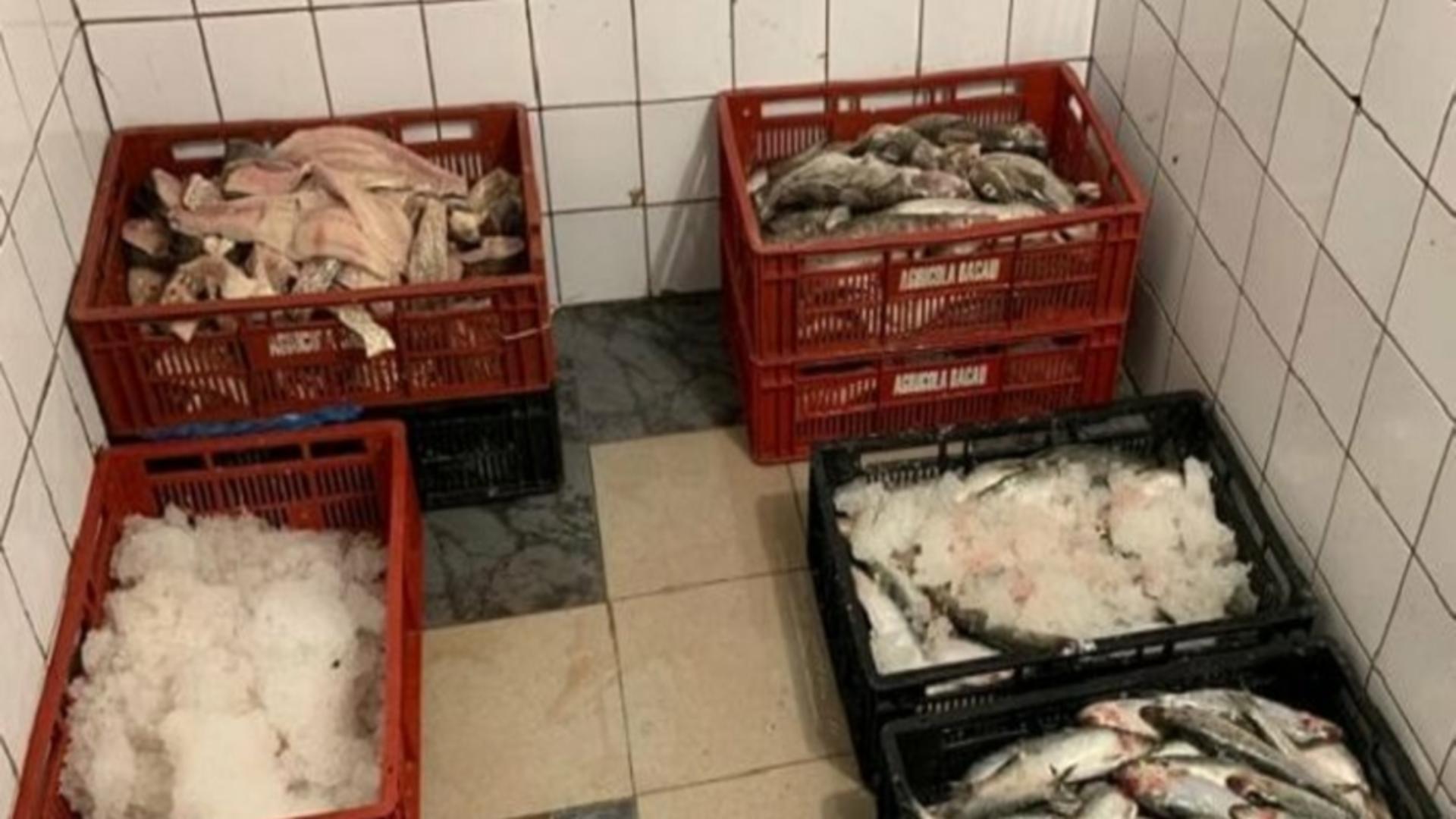 Zeci de tone de pește, impropriu consumului uman, adus pentru comercializare în România