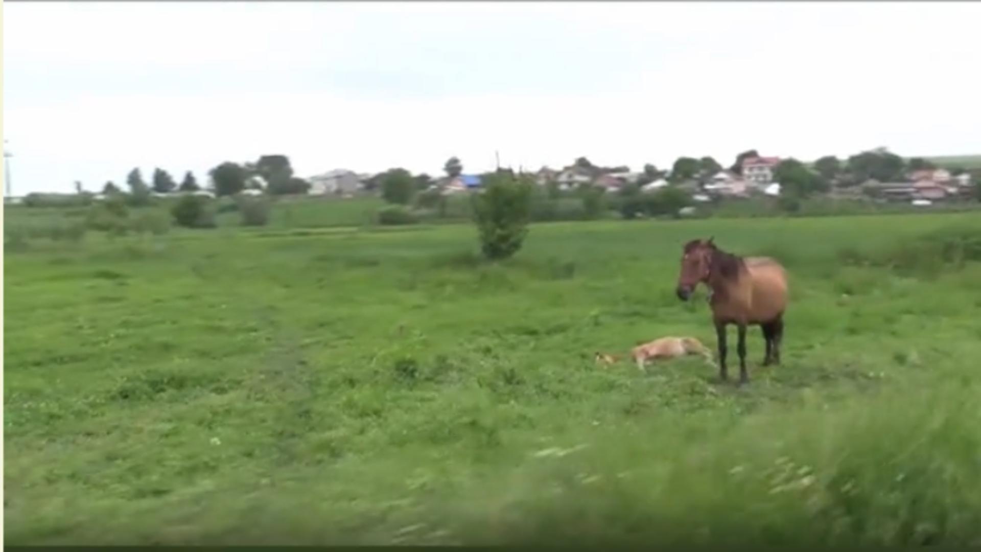 Doi bărbați au bătut un cal până la moarte