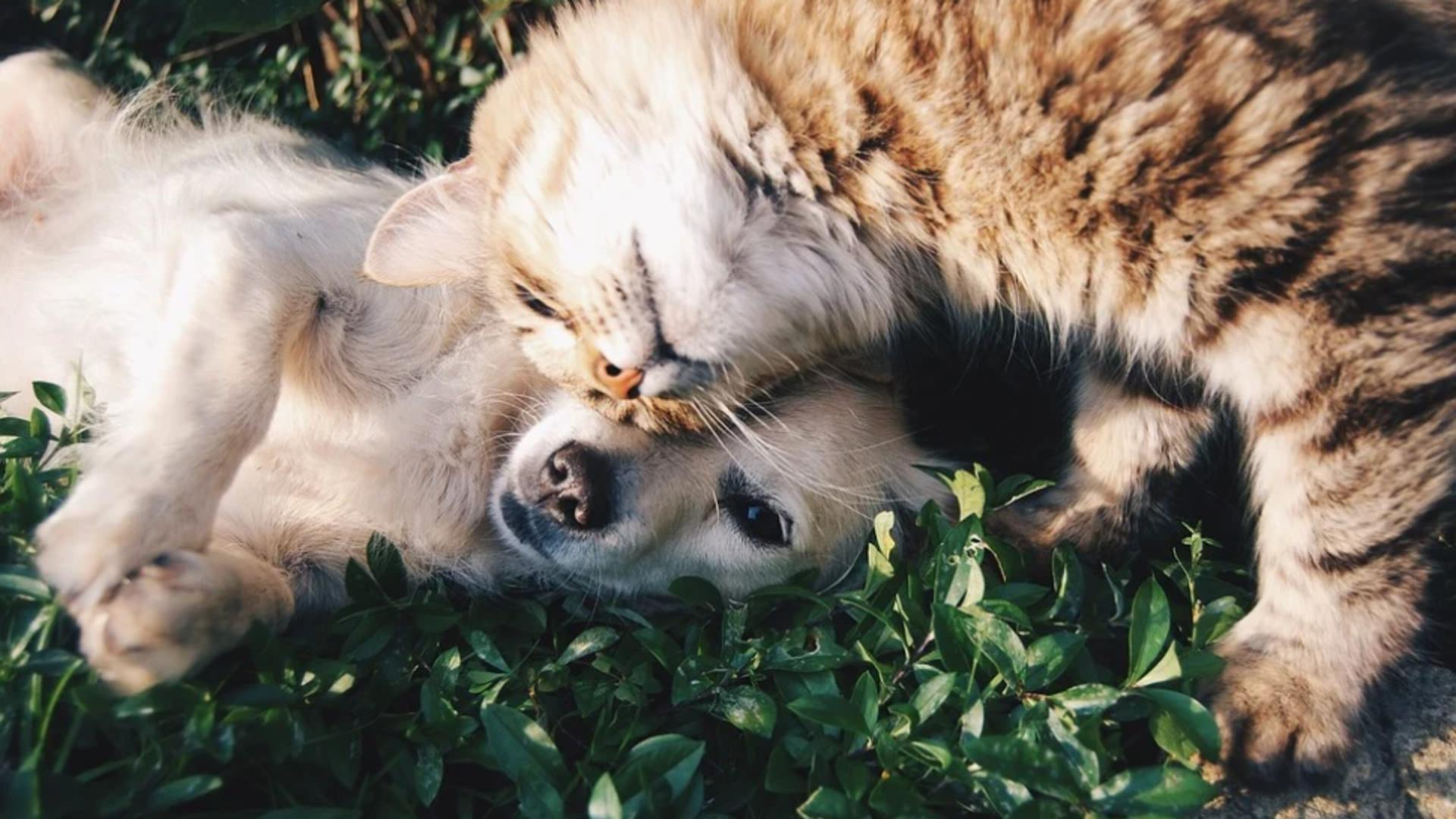 Târgul de adopție de la Afumați - Cum poți salva un câine sau o pisică