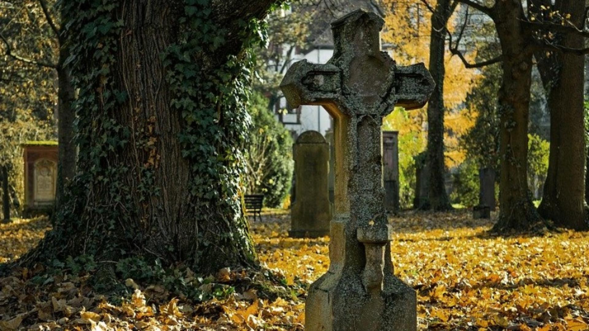 Morminte profanate de urs / Foto: Arhivă