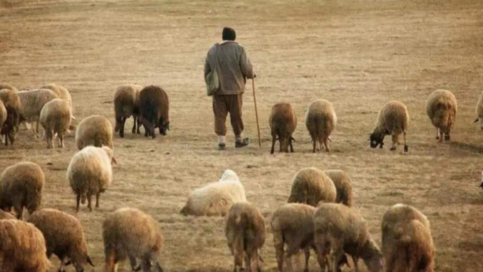 Un cioban și-a găsit sfârșitul pe linia de tren. Foto/Arhivă