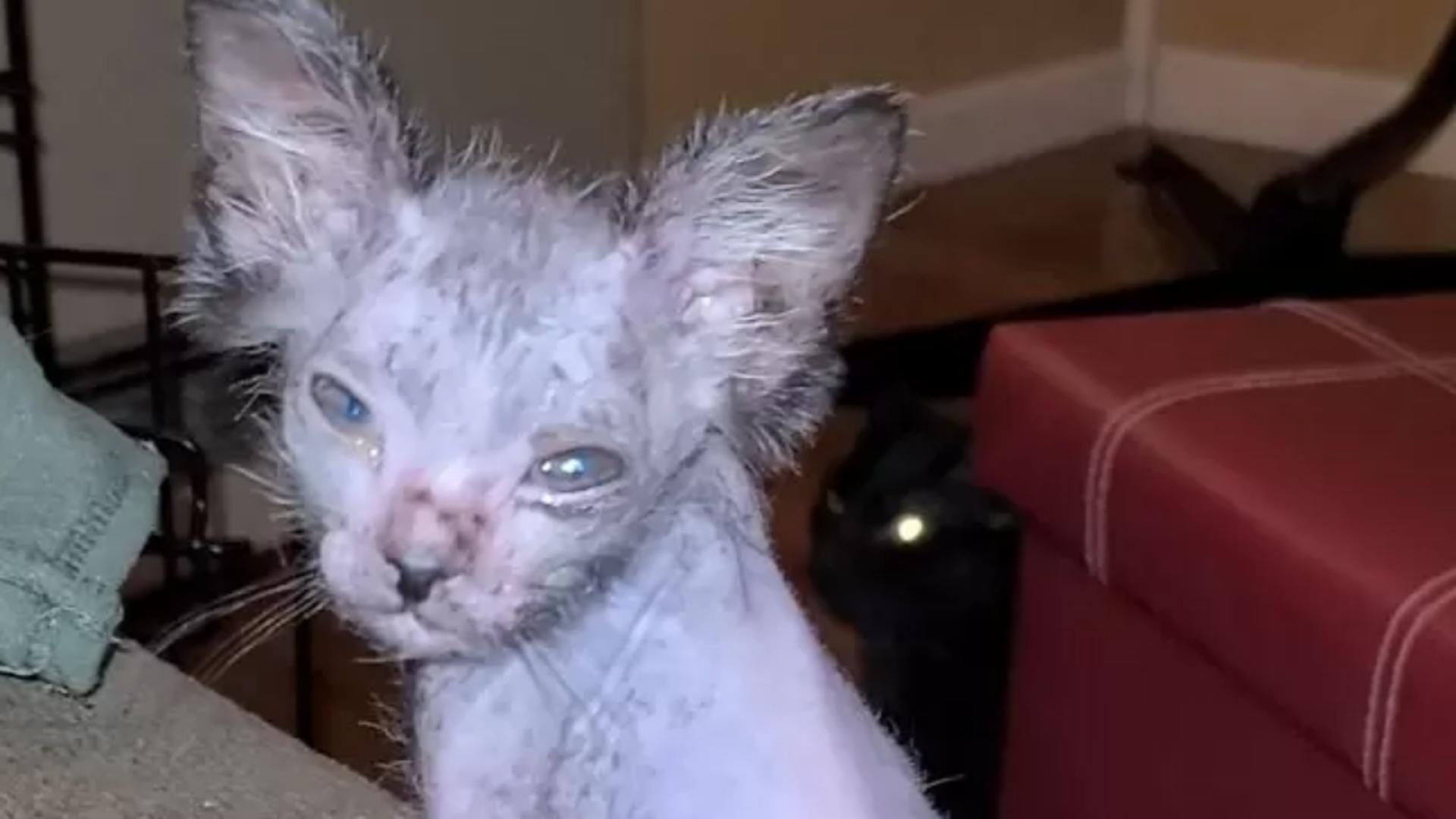 Părea o pisică - Ce este în realitate