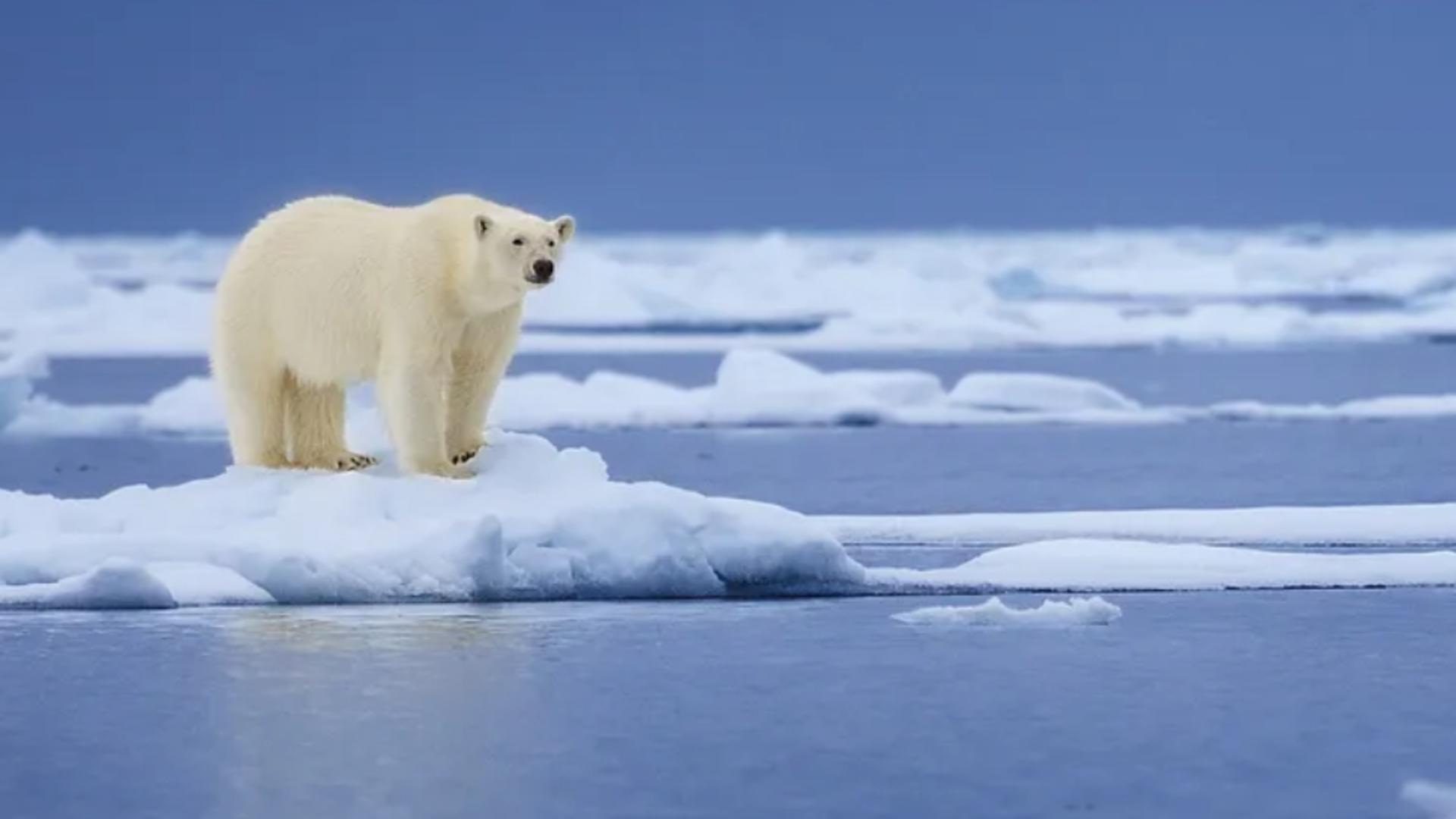 Căldură SUFOCANTĂ la Cercul Polar arctic: Temperatură-record în prima zi de vară