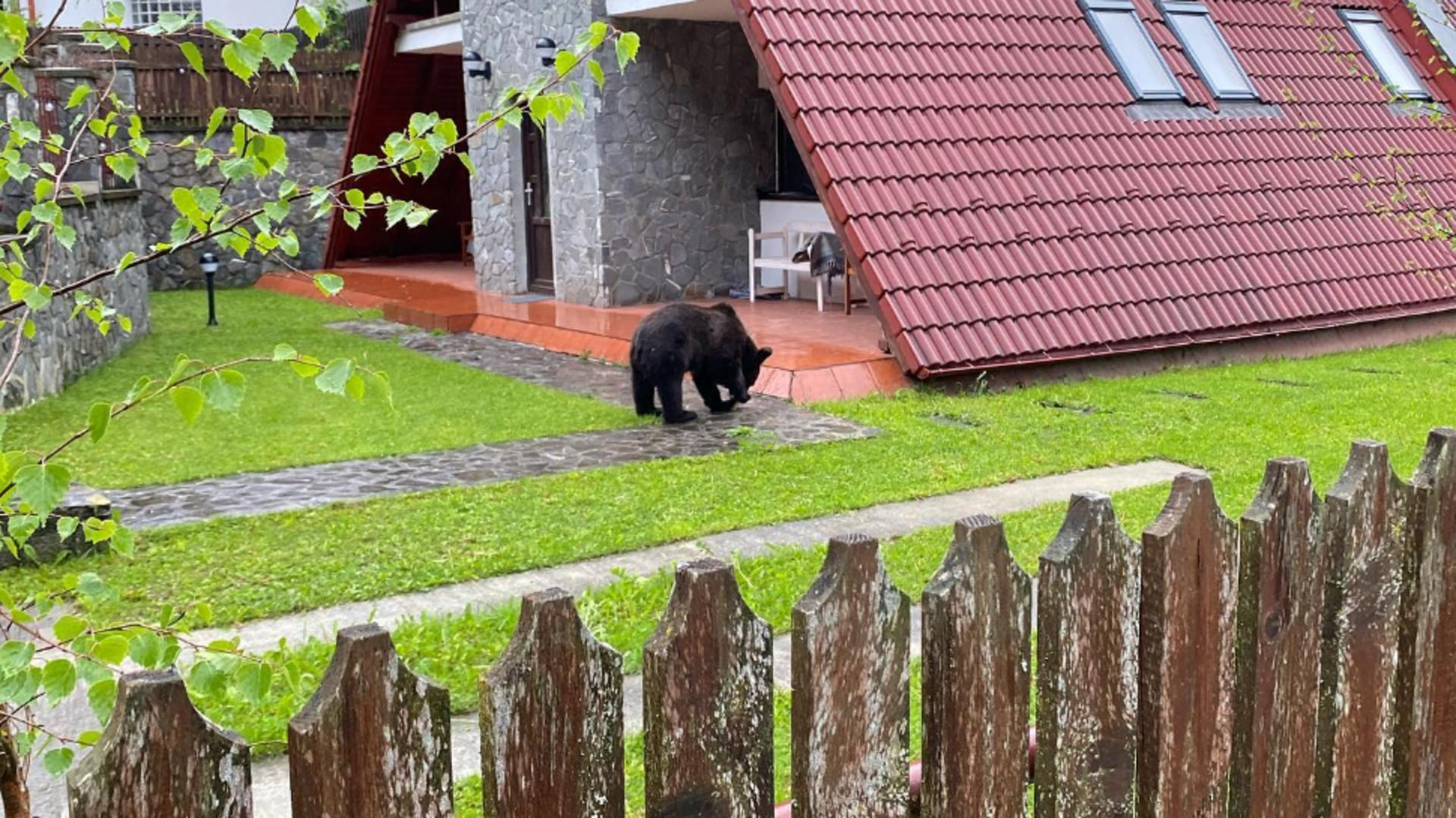 Un urs a intrat într-o casă din Sinaia.Foto/Facebook/marin panait