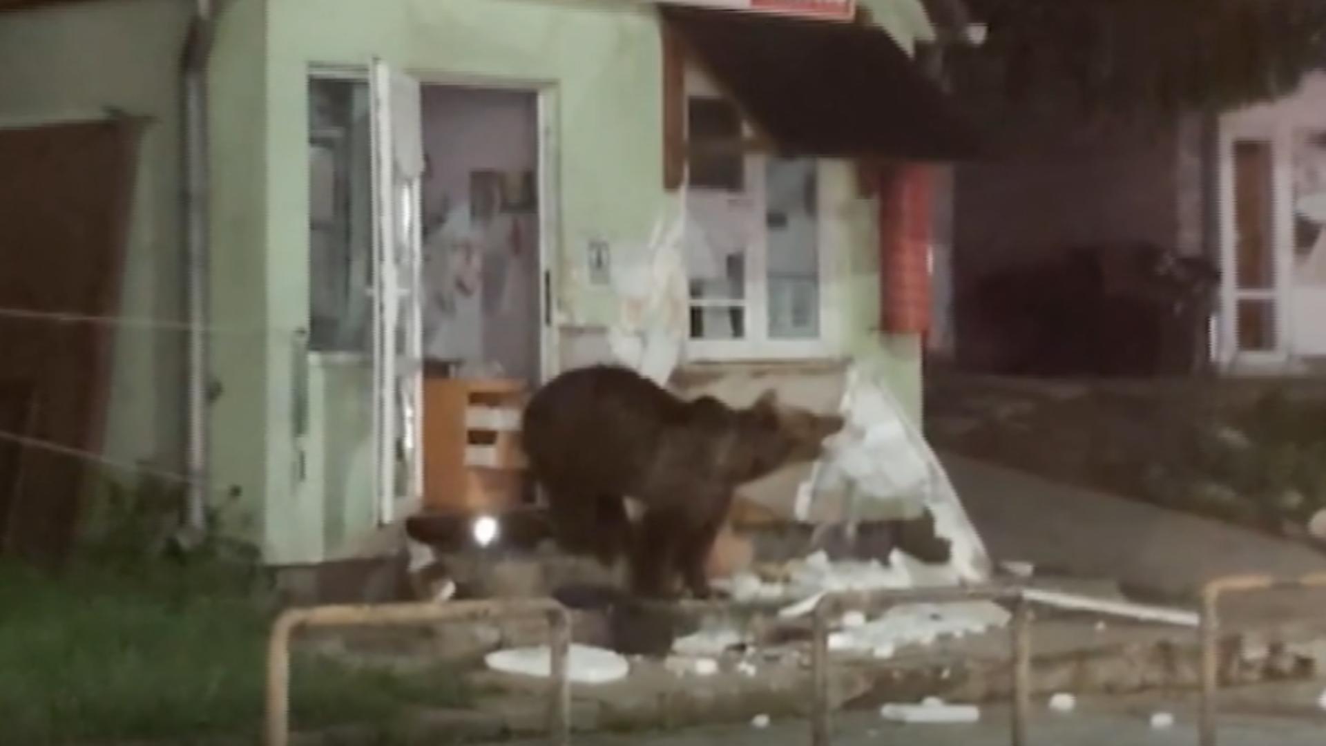 Alertă de urs
