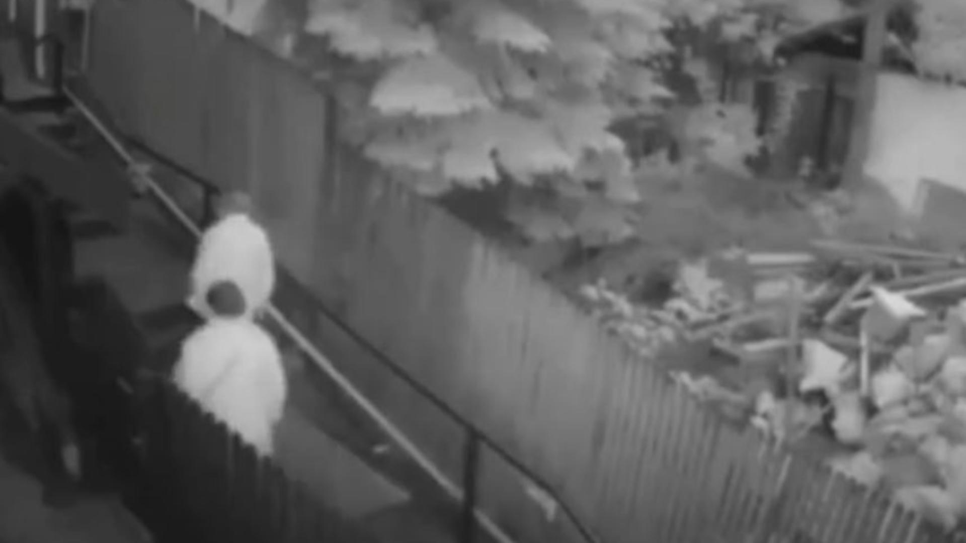 Un urs a fost filmat în timp ce urmărea doi oameni/ Foto/captură video