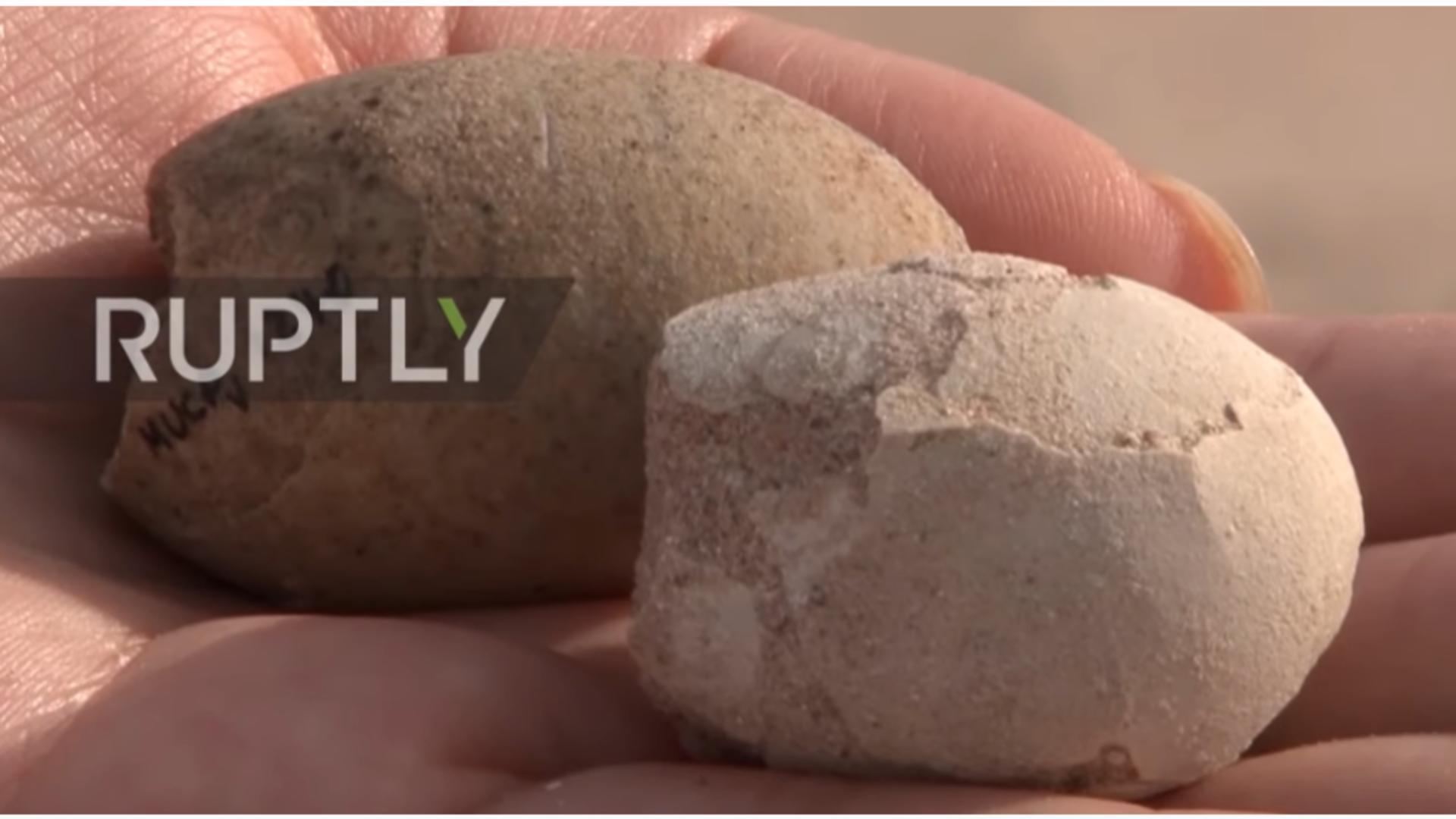 Ouă fosilizate de păsări preistorice, descoperite în Argentina / Captură foto