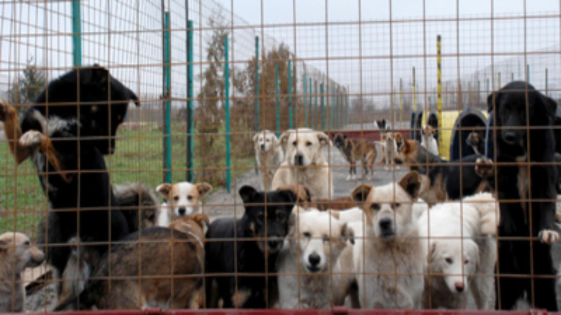 Percheziții la cel mai mare adăpost de animale din județul Giurgiu