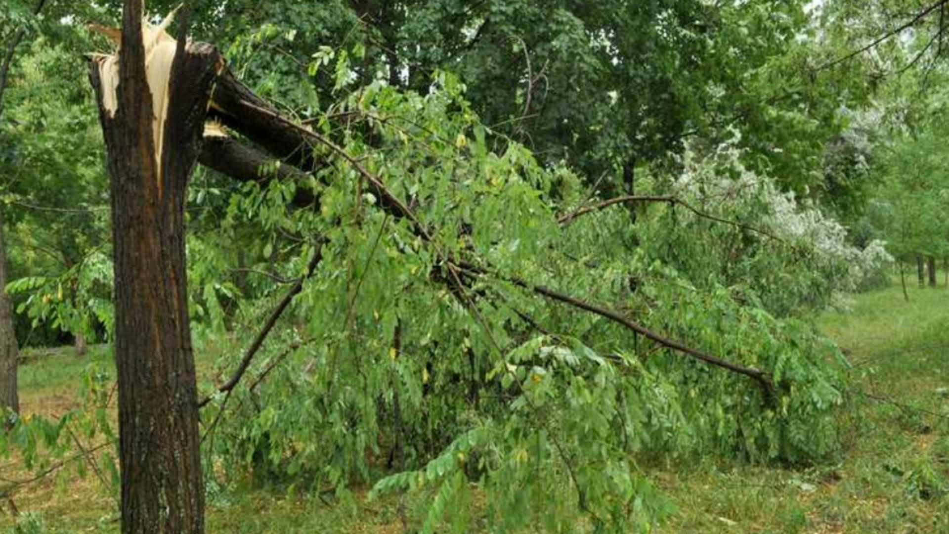Copac prăbușit - imagine de arhivă