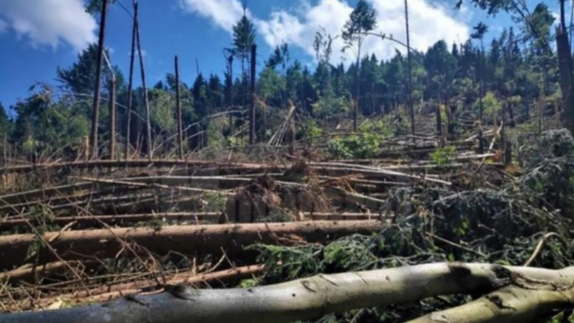 Pădure din Suceava, distrusă de ciclon