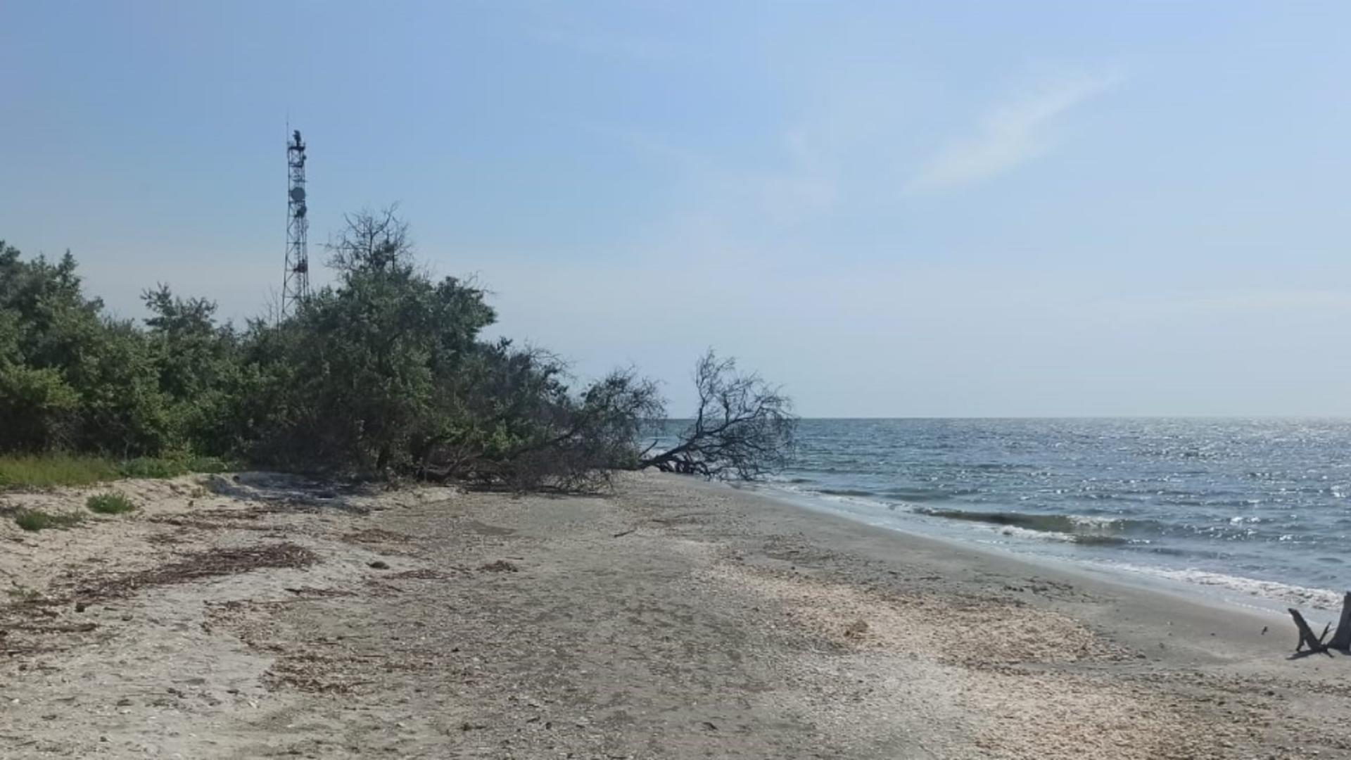 Viperele periculoase din Delta Dunării, mult mai numeroase - Avertisment pentru turiștii de pe plaja Perișor