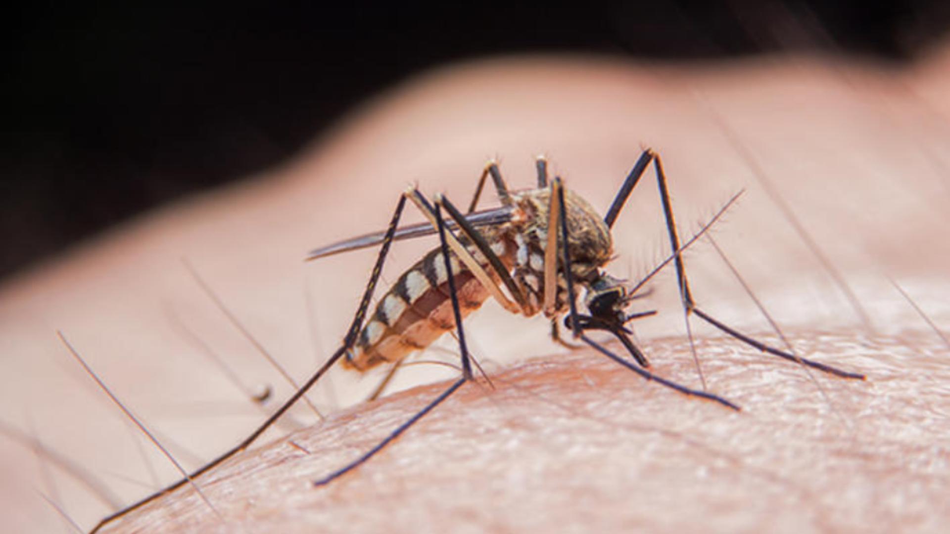 Înțepătură țânțar