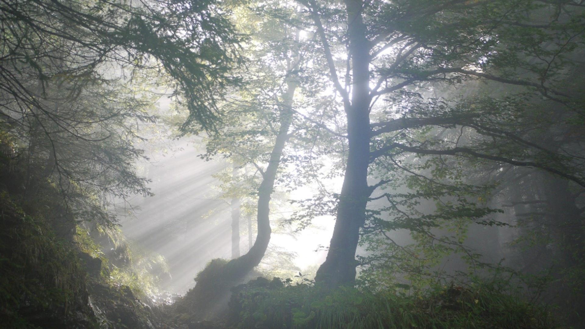 Descoperire periculoasă într-o pădure din Neamț. Sursa foto: Pixabay