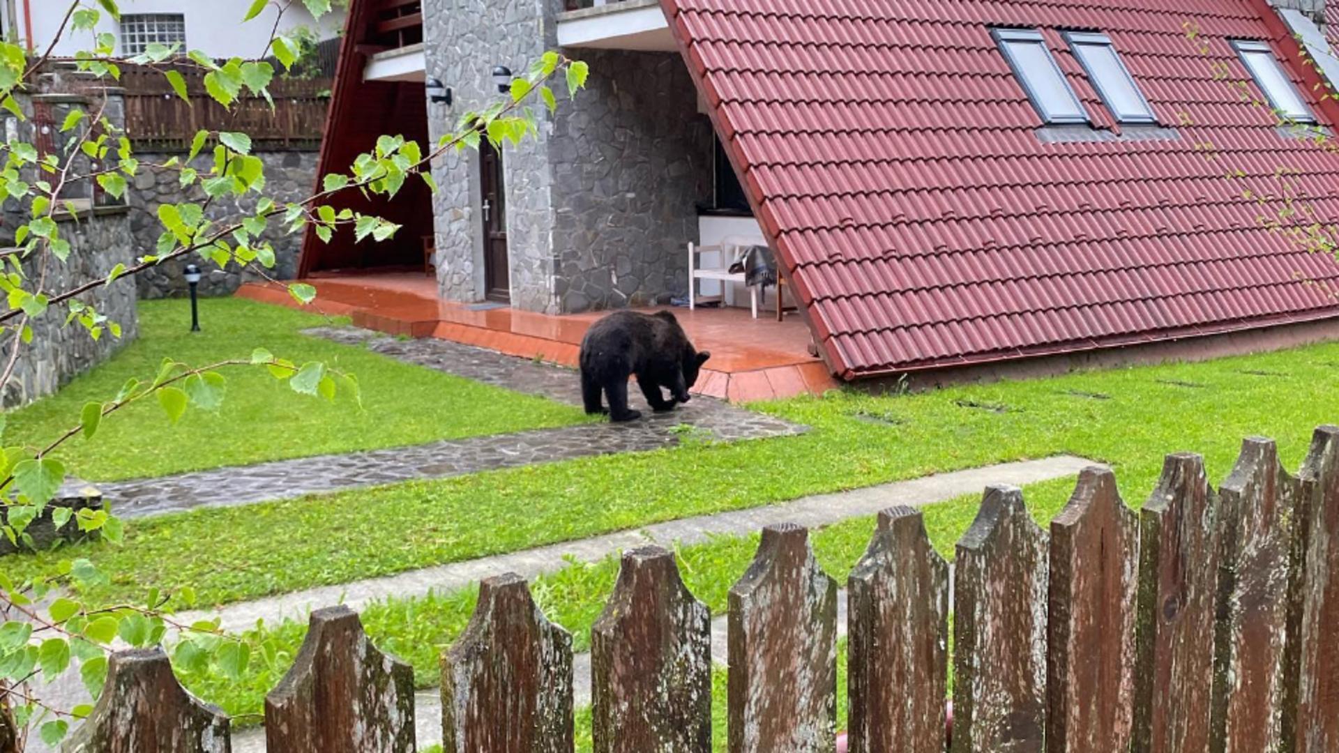 Un turist a fost surprins de jandarmi în timp ce hrănea un urs din mașină. Foto/Facebook.