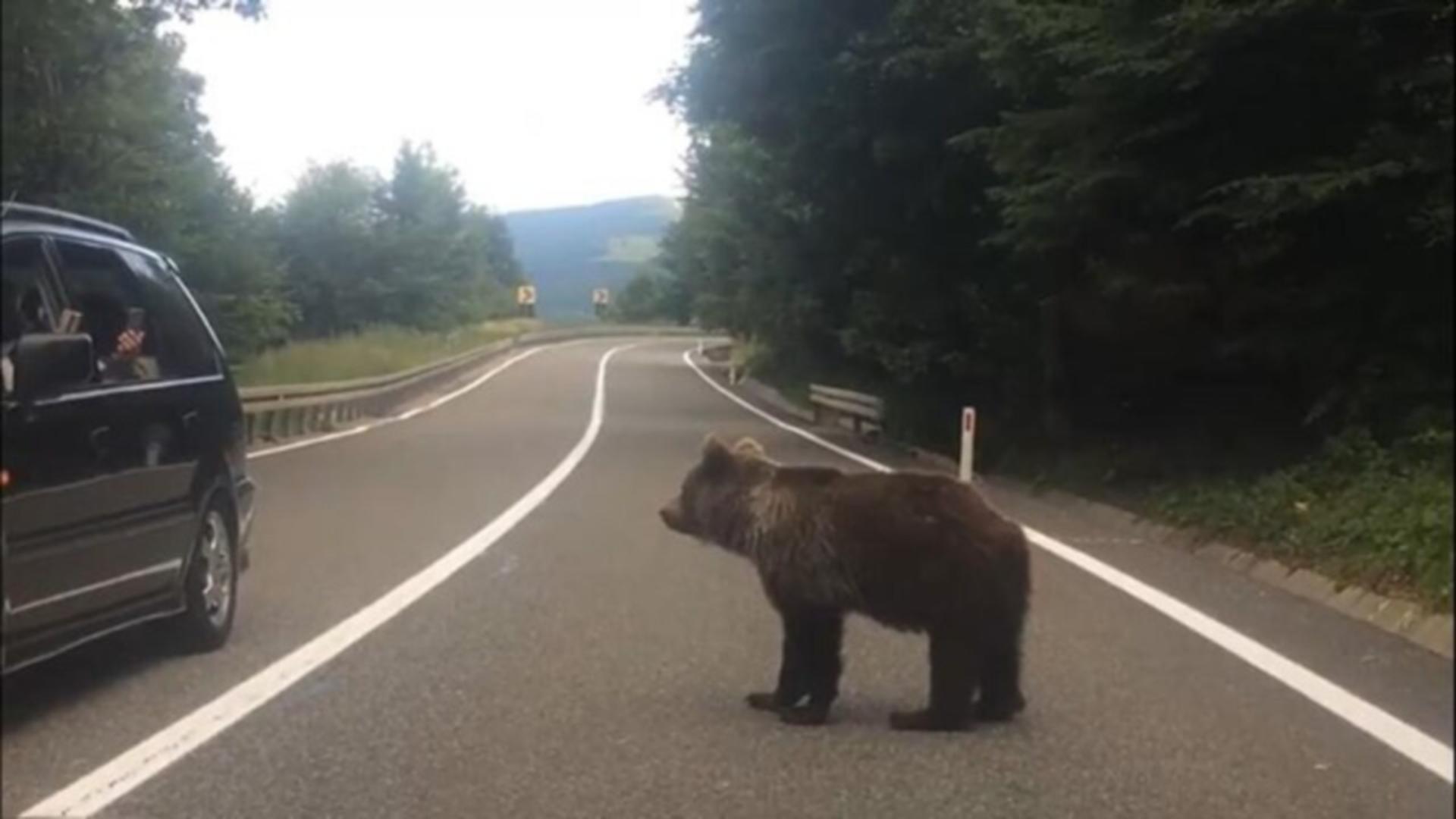 Bărbat din Vrancea, filmat când hrăneşte şi se apropie periculos de un urs flămând