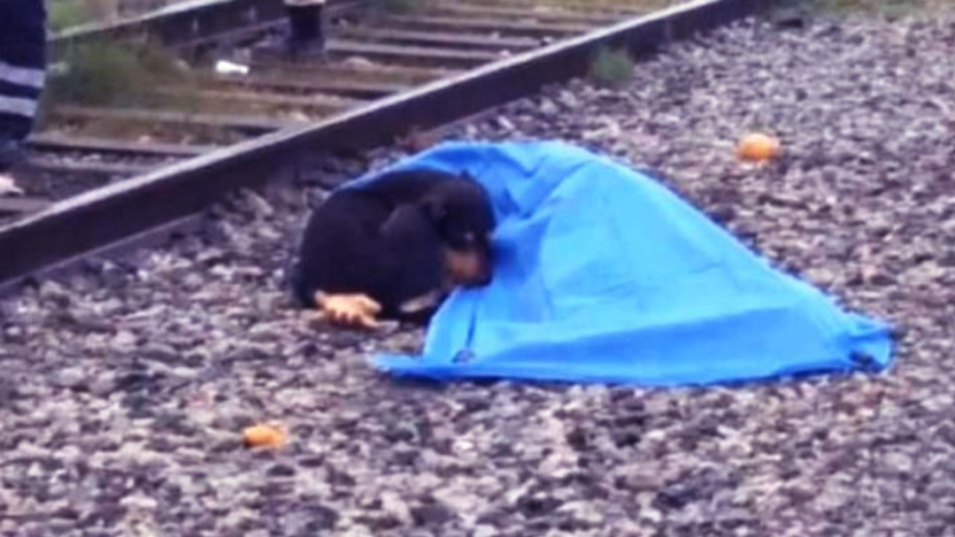 O cățelușă s-a cuibărit lângă trupul lipsit de viață al stăpânei lovite mortal de un tren