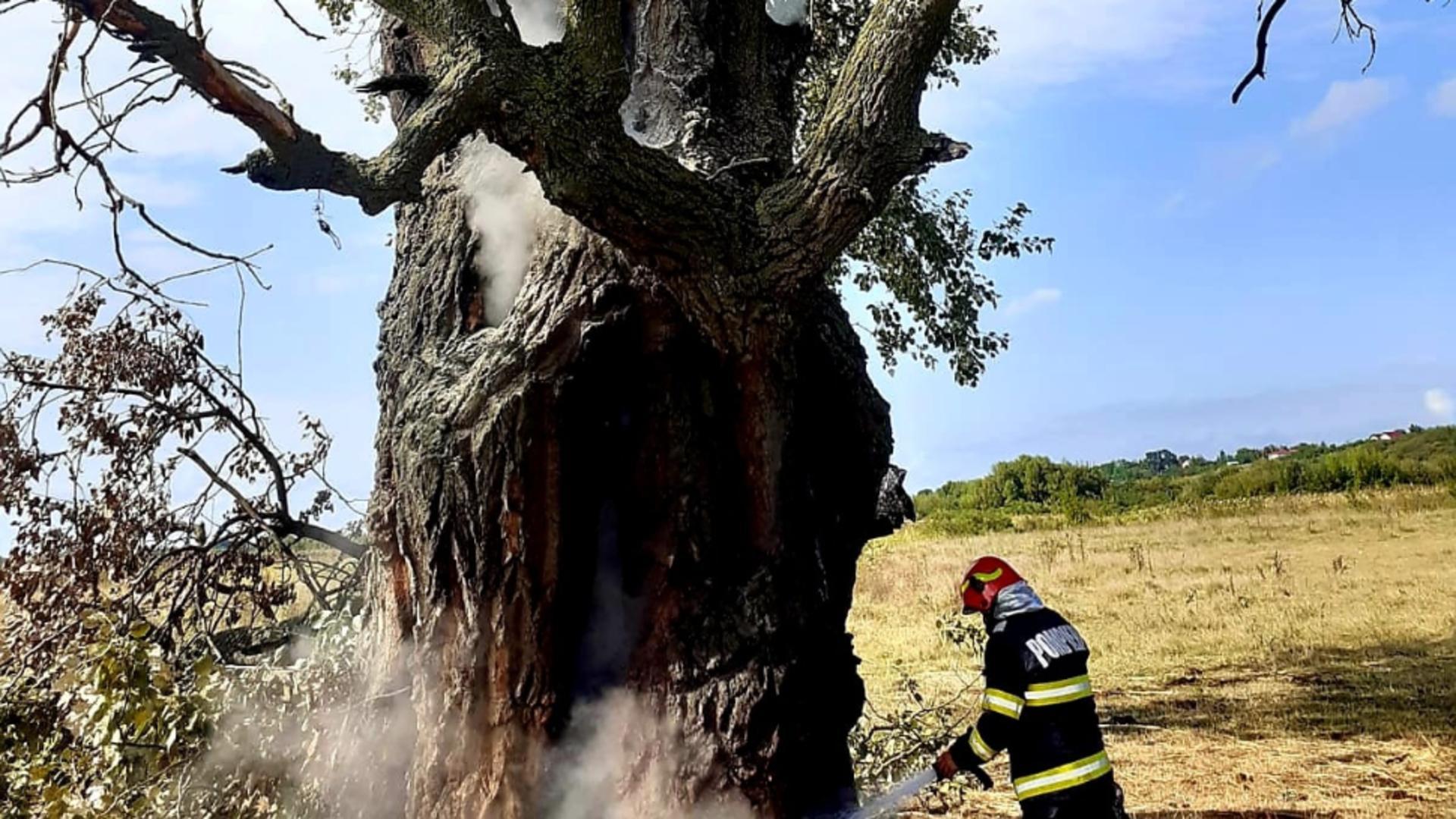 Un copac secular din comuna Vânătorii Mici, judeţul Giurgiu, a fost lovit de un fulger