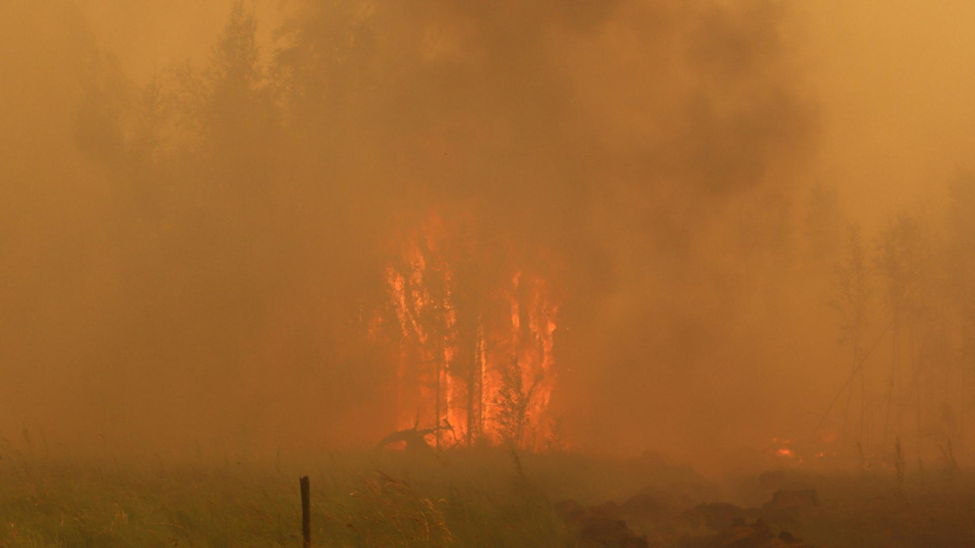 Incendii vegetație Siberia: Foto / Twitter