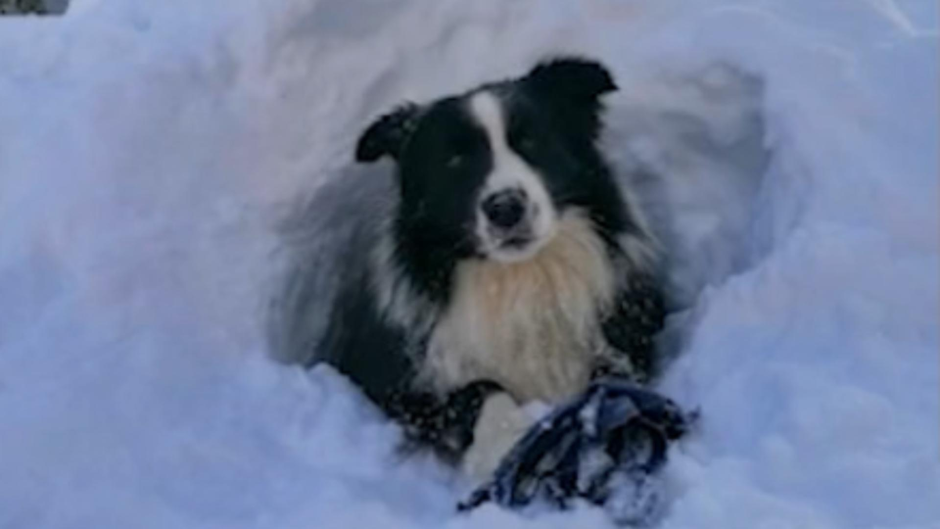 Carp, singurul câine de intervenţie al Salvamont Prahova / Captură foto