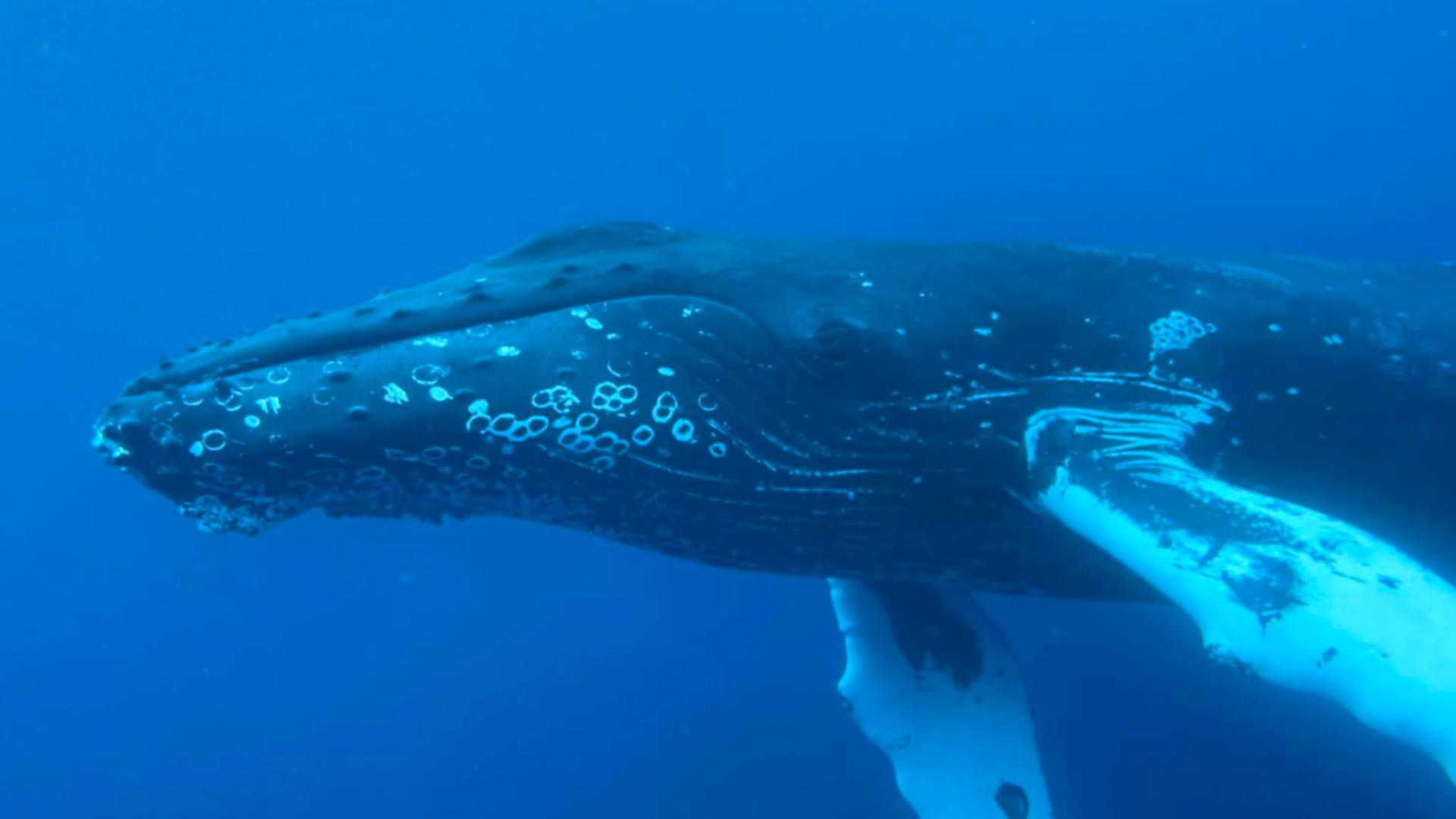 Balena albastră / Foto: ProfiMedia