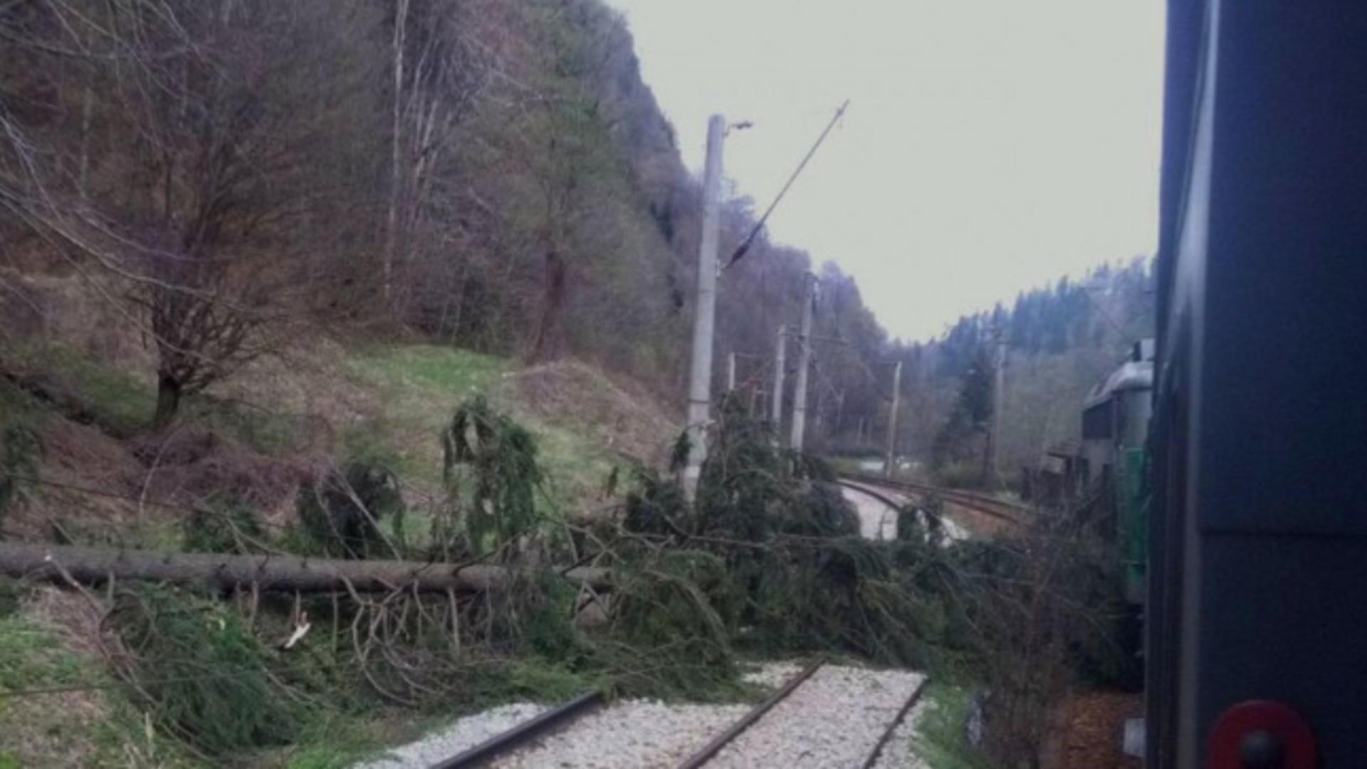 Trenuri de călători BLOCATE în Cluj, Iași, Brașov și Mureș din cauza COPACILOR prăbușiți pe calea ferată