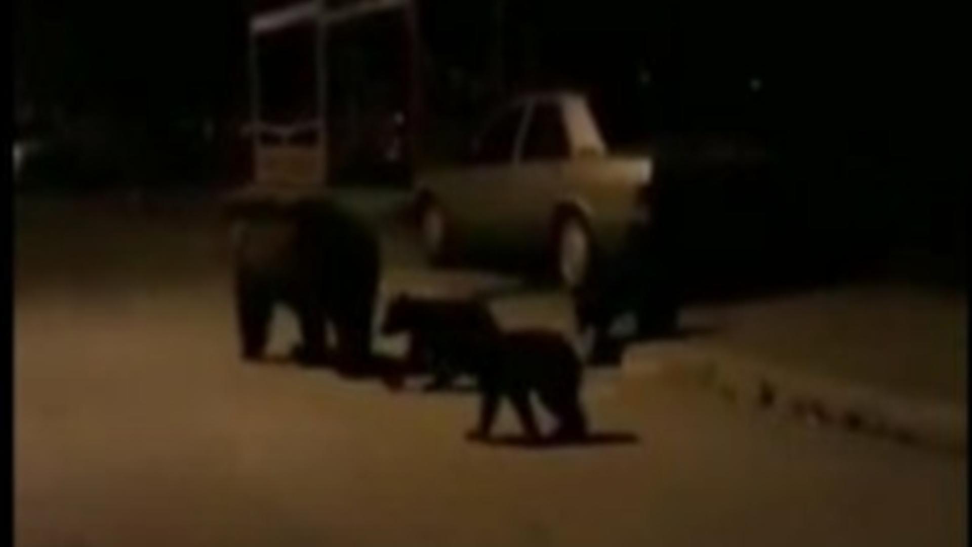 Ursoaică cu pui