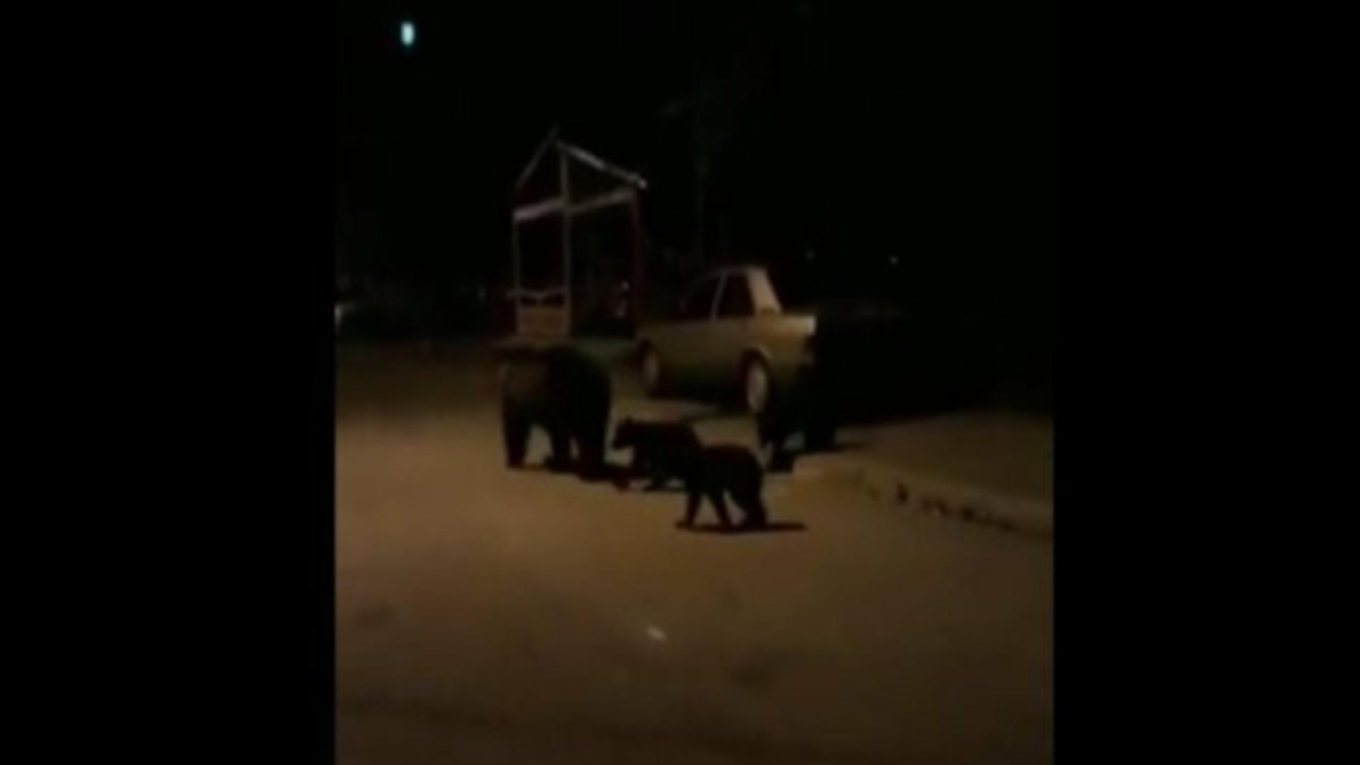 Alertă urs Harghita