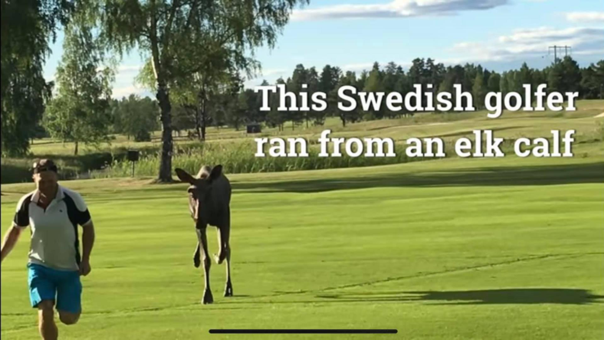 Postare Ambasada Suediei