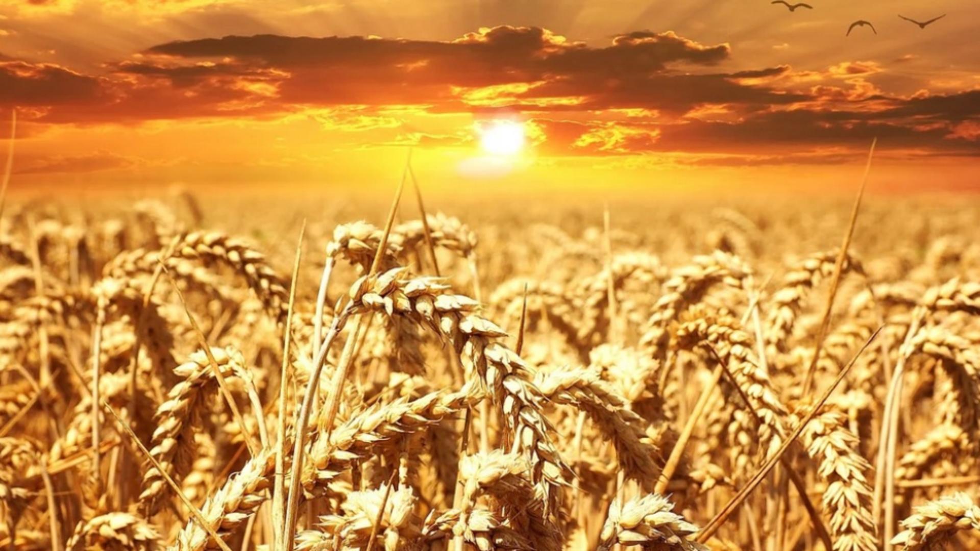 Climatologii avertizează: vor fi multe zile cu temperaturi de peste 50 de grade