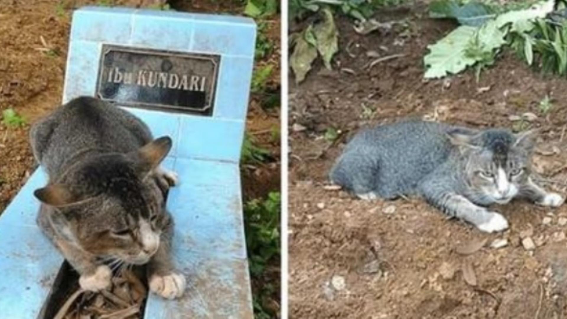 Povestea sfâșietoare a pisicuței care refuză să părăsească mormântul stăpânei