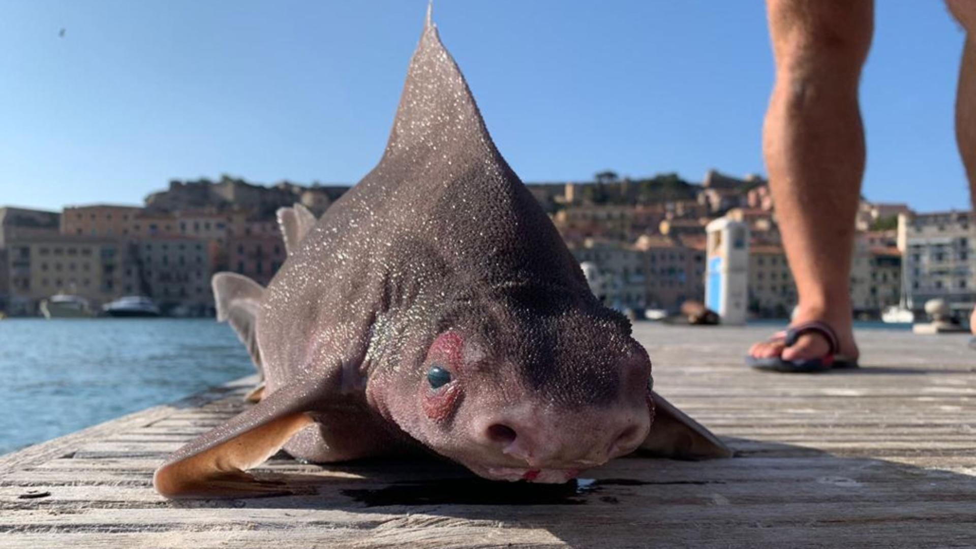 Creatura bizară care seamănă PANICĂ printre pescari / Foto: Profi Media