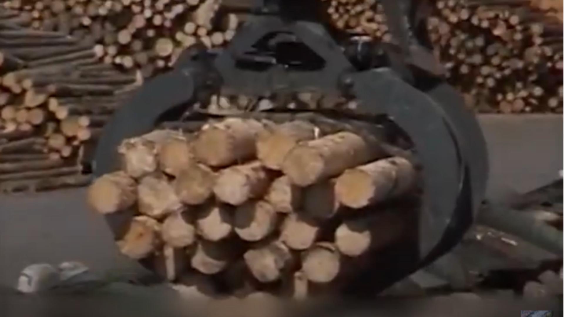 CULISELE STATULUI PARALEL / Mafia lemnului, încrengături la la nivel înalt. Flutur, apropiat al austriecilor care taie lemne