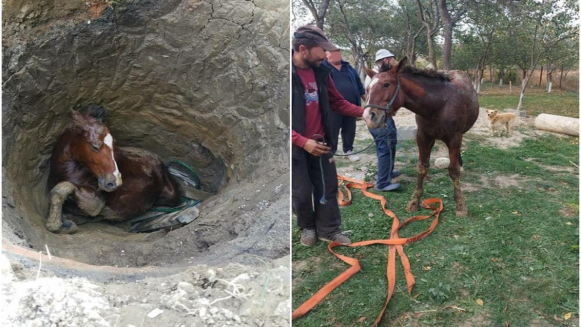 Salvarea spectaculoasă a unui cal căzut într-un puț Foto: ISU Bihor