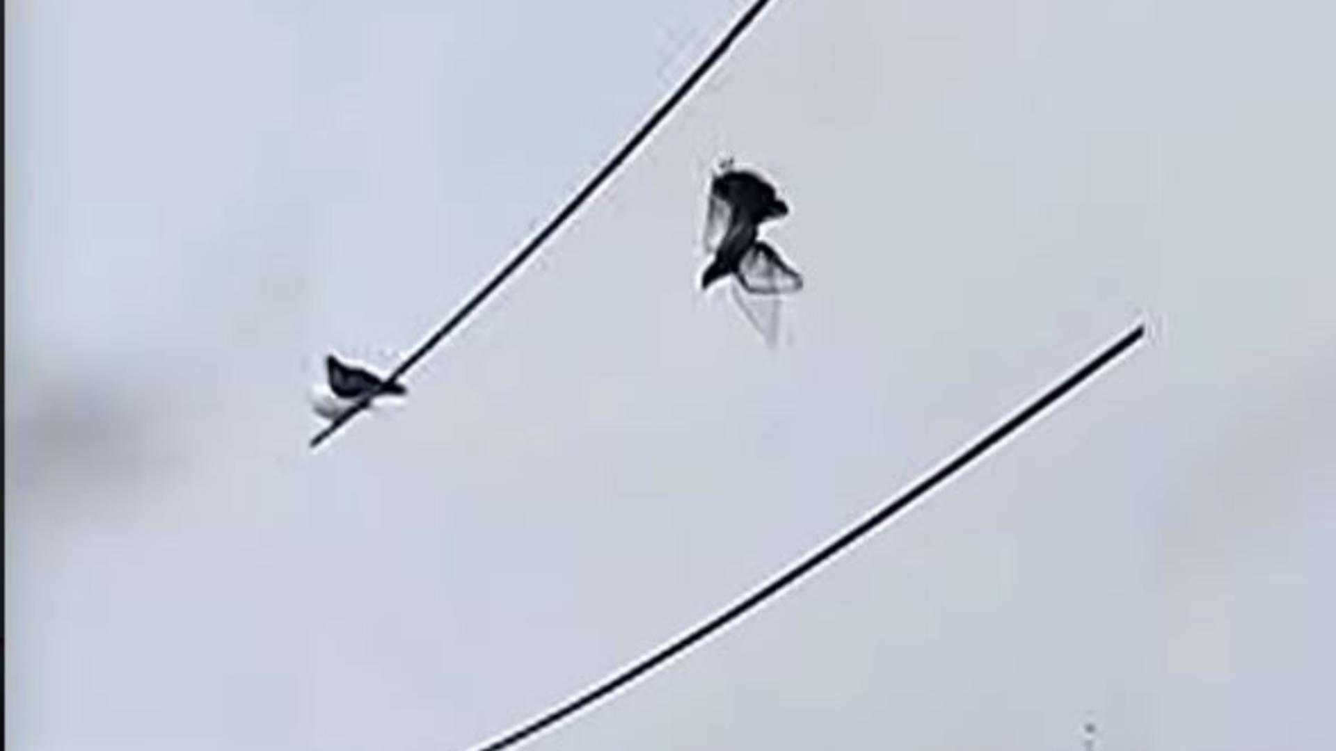 Cum au reuşit poliţiştii din Peru să salveze un porumbel care a atârnat 12 ore pe un cablu. Captură video